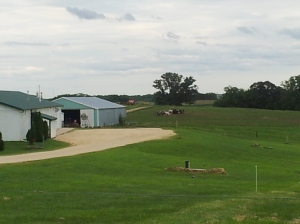Wisconsin's Farm fields at Uplands Cheese