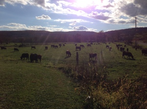 Tilldale Farm Pasture