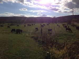 Tilldale Farm Pasture