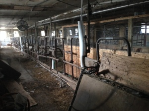 TIlldale Dairy Stalls